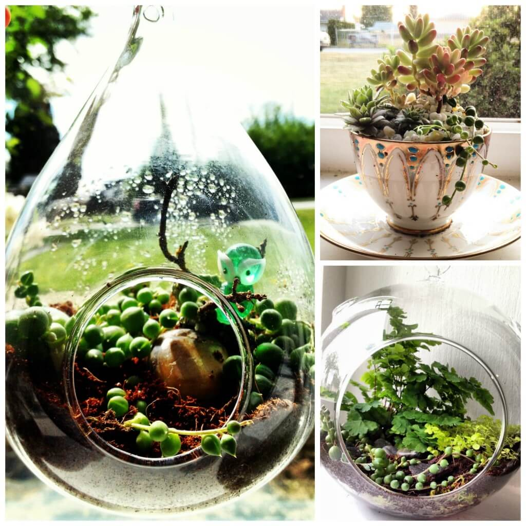 I make terrariums with my boyfriend; we have taught ourselves essentially and really enjoy it. Our home is filled with them. ~Molly